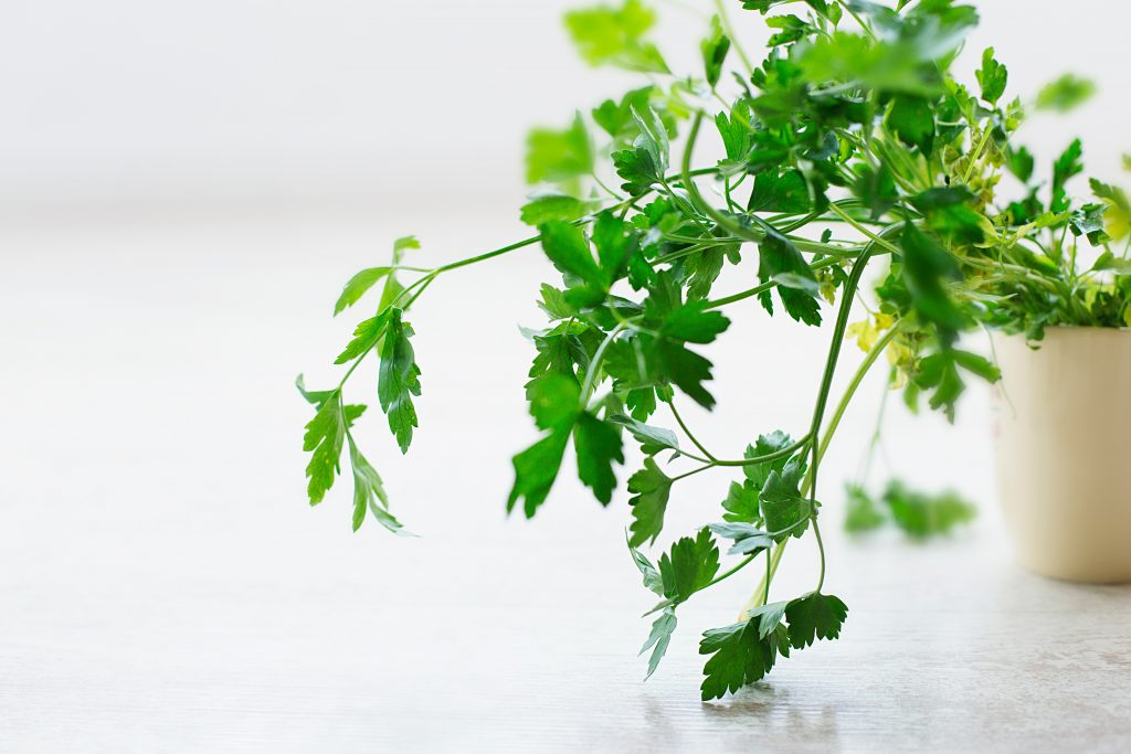 parsley healthy